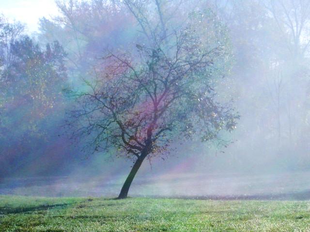 la nebbia se ne va