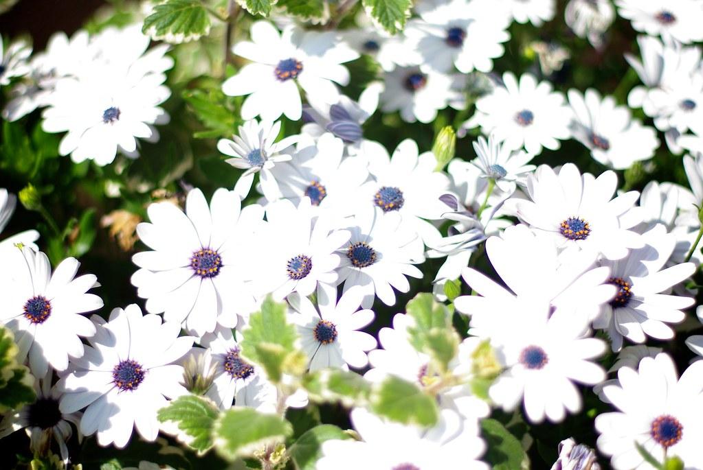 Kwiecie / Blossom
