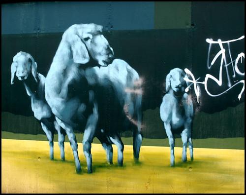 Lämmer - lambs