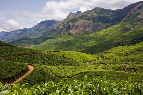 trip vacation landscape tea may myfav kerala hills plantation 2008 teaplantation southindia munnar idukki kolukkumalai canon40d keralatrip2008