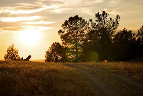 california trees sunset sky grass yellow clouds lens landscape golden flare hillside roadway ★★★★