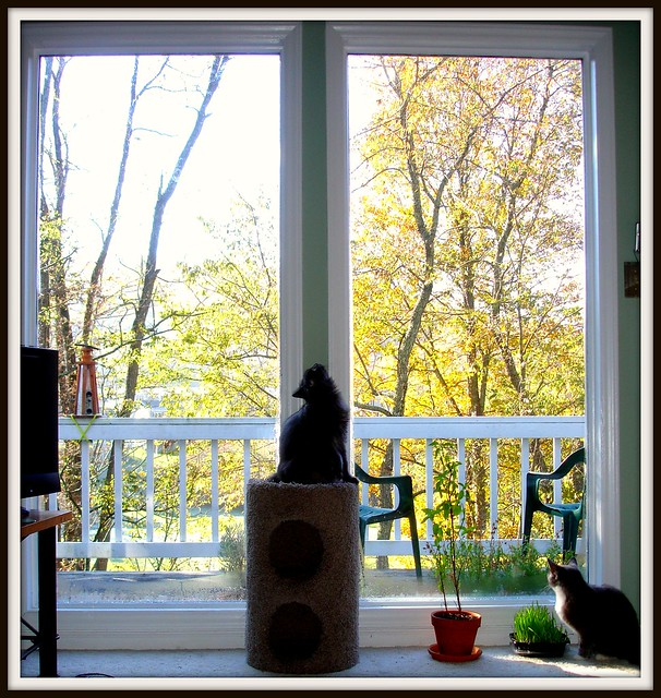 Cats and Window