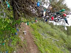 Christmas Tree - Ridgeview Trail - Klamath Falls Mountain Bike Trails
