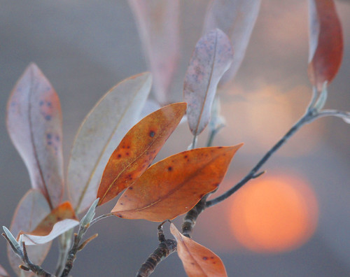sunlight leaves sunrise outdoors dawn spring bokeh twigs