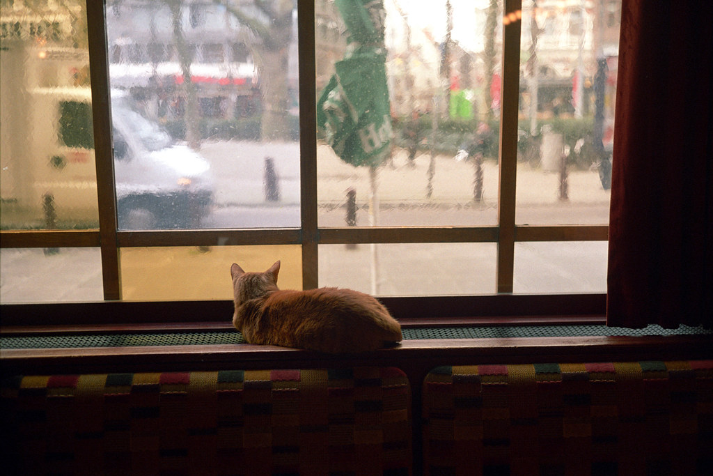 A kitty on alert at the Ten Bells Pub in Amsterdam. It's a testament to the quietness of the Leica that he didn't hear me.