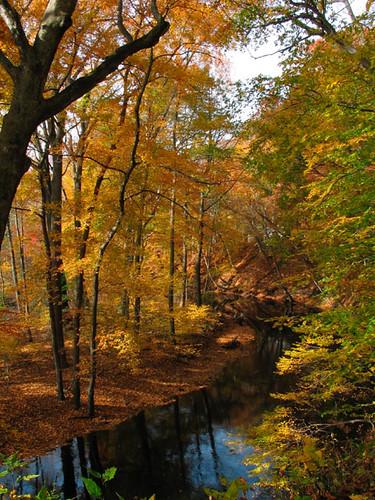 autumn newjersey burlingtoncounty smithvillepark intotheoutside