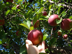 Apple Picking | by joyosity