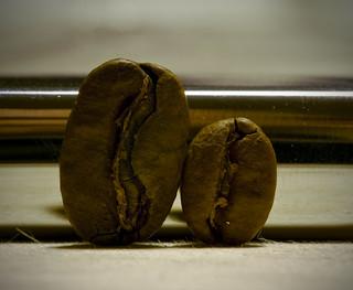 Maragogype, the elephant bean | by Arne Kuilman