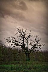 Autumn | by MatkirschPhoto