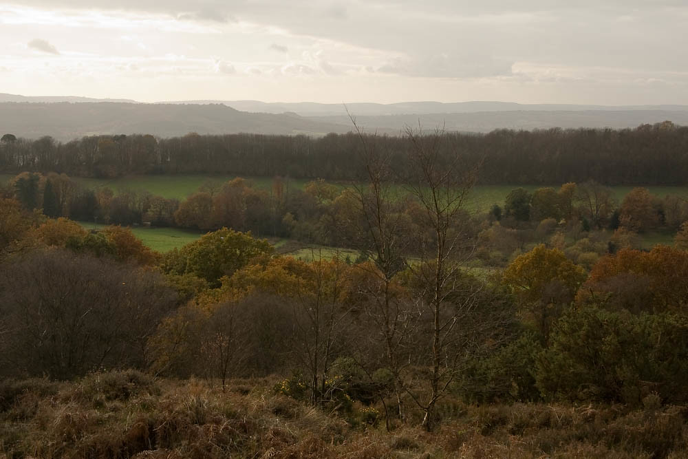 View from Black Down