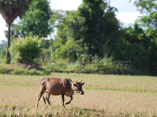 nt2_livestock500 | by East Asia & Pacific on the rise - Blog