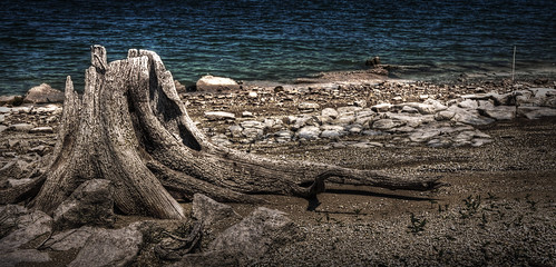 lake tree austin texas tx stump travis laketravis arkansasbend top20texas bestoftexas