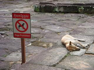 dog blatantly disregarding the sign | by kathleenbarber