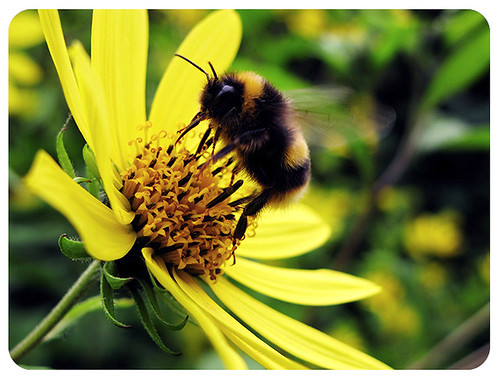 The Bee's Flower