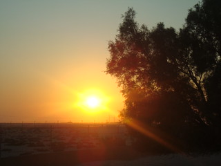 Al Areen Wildlife Park & Reserve - sunset behind the trees