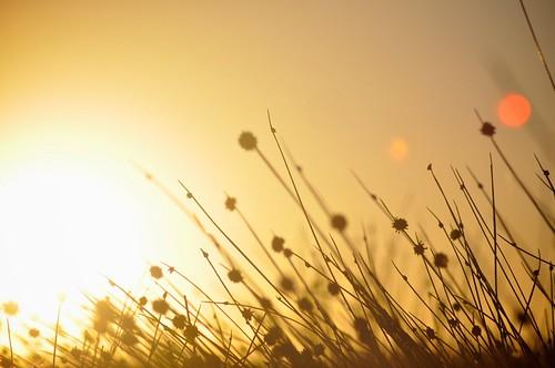 sunset grass dof bokeh sydney australia glebe