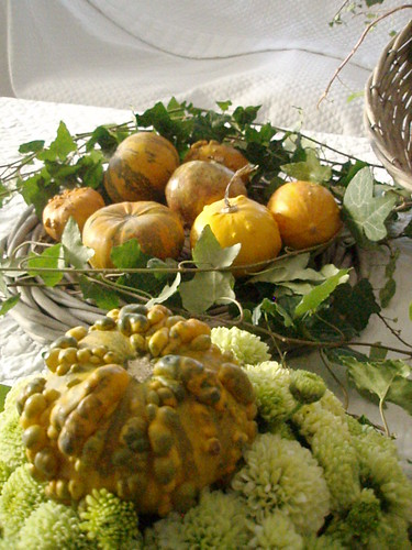 ZUCCA5 | by marybloom