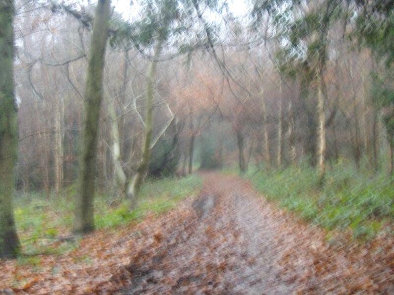 Path ahead Box Hill to Leatherhead