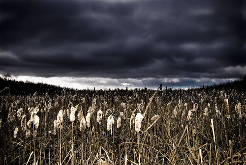autumn storm slr fall nature weather clouds photoshop work landscape outside outdoors nikon edited flash nb fredericton newbrunswick cattails swamp nikkor oromocto 10mp 1855mmf3556 d80 nbphoto 18mm55mm f35f56