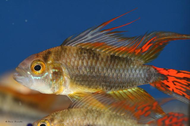 Série com peixes - Fishes's series 08-03-2008 552
