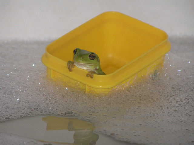 Frog in a boat in the bath
