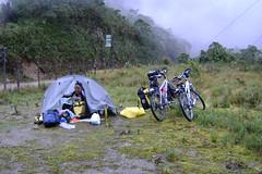 Morning at high camp in Podocarpus natl park. A wet night.