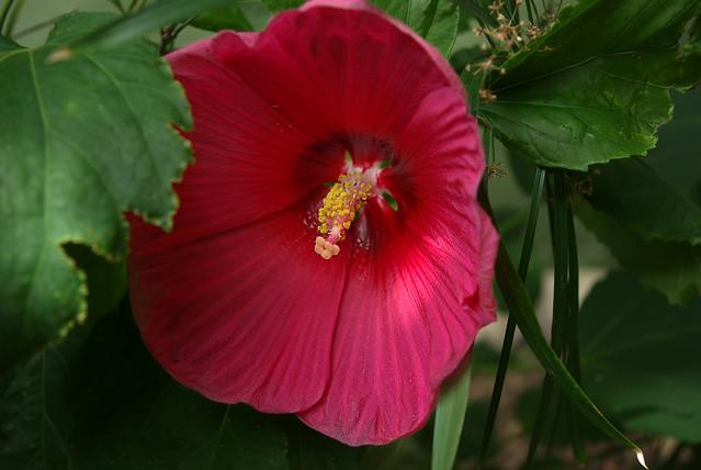 Flower, The Riverwalk, San Antonio, TX