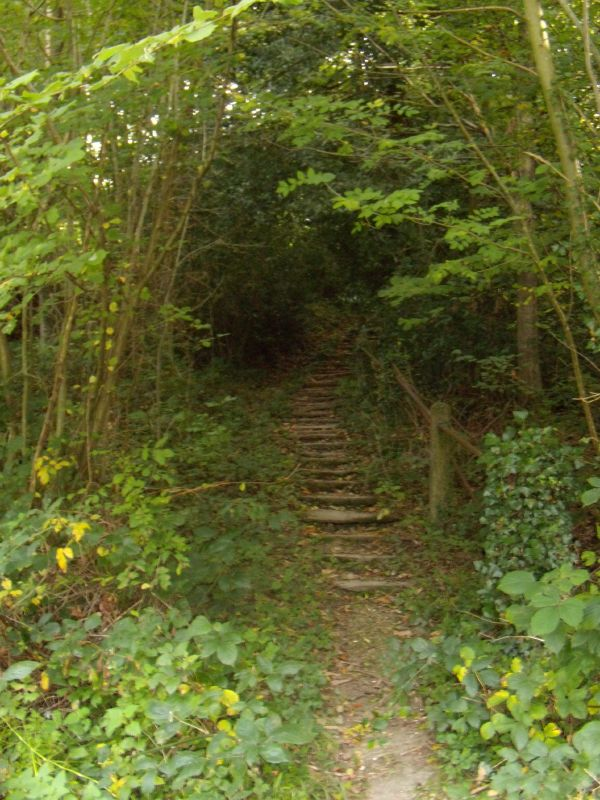 Infamous steps These steps may look innocent but they'll have you as soon as look at you. If you're looking at them from this angle, it's too late. You've probably already fallen down them. Balcombe Circular via Ardingley Reservoir (summer walk)