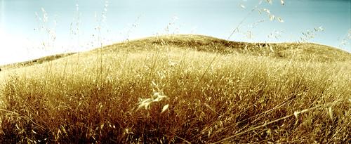 panorama film grass 35mm fuji horizon hill fnd dry 202 sensia russianridge midpeninsularegionalopenspacedistrict