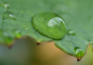 Droplet on grape leaf_2 | by armaggesin