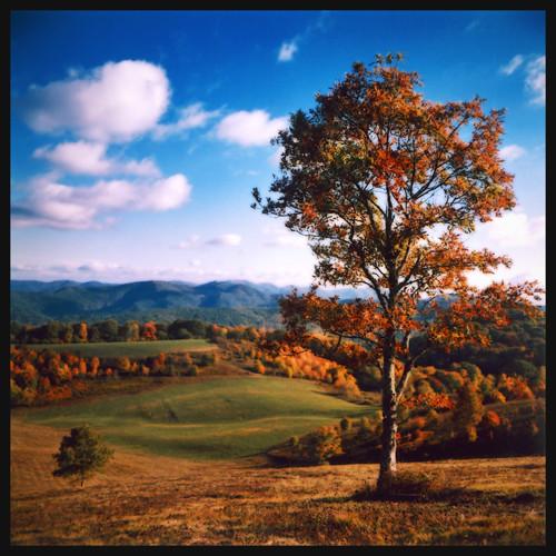 autumn trees sky mountains color tree fall leaves forest mediumformat leaf maxpatch 100iso agfaoptima hotspringsnc kowasix madisoncountync