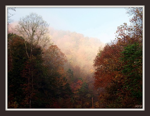 morning autumn trees color fall nature fog landscape photography kentucky olympuse520 kathyweaver