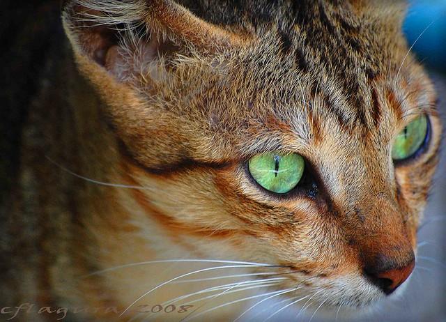 cat6 - waiting...