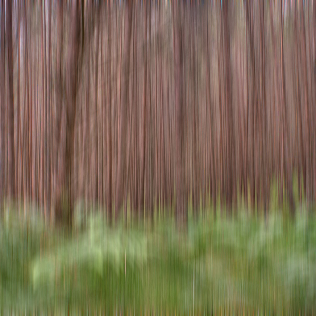Impenetrable Forest