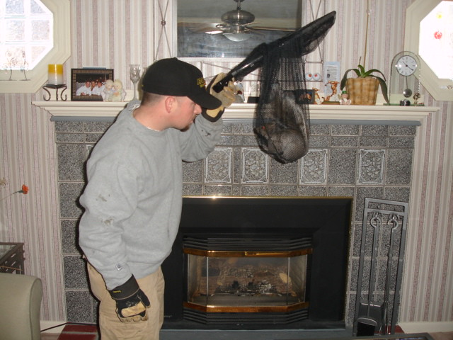 Squirrel Removal From Fireplace Squirrel That Fell Down A Flickr