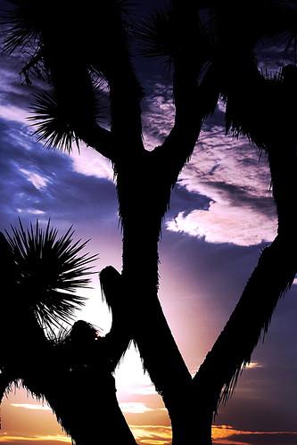 sunset sun color silhouette clouds canon desert joshuatree kitlens gimp dpp naturesfinest xti 400d canon400d canonef75300mmf456iii ourplanet photofaceoffwinner pfogold freewarephotoeditors