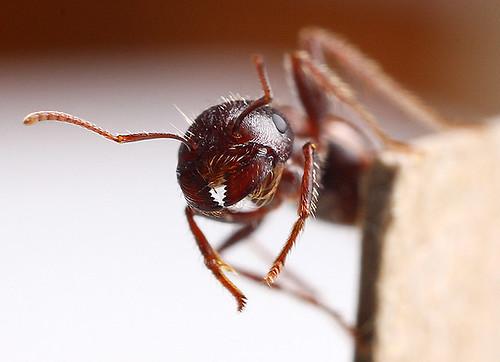 Hesit-ant