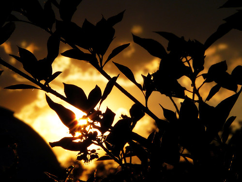 sunset sky sun silhouette clouds newjersey nj parkscape richardwdekortepark meadowlandsenvironmentcenter