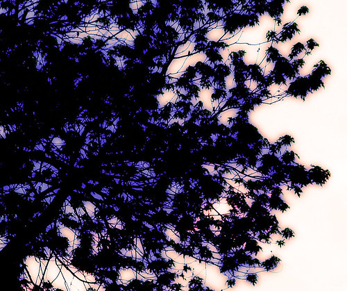 morning pink tree sunrise purple hendrix itshumpday whydoigetupsoearly atleastistayedawakelongenoughlastnighttoseetheendofhellskitchen soeveryonehumpsomebodytoday