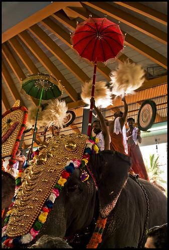 elephant umbrella pachyderm kerala gettingready trichur keralam pooram thrissurpooram godsowncountry caparison venchamaram alavattam ezhunnallippu caparisonedelephant anachamayam thiruvambadytemple goldplatedcaparison pooramkuda thiruvambadykrishnan keralaselephantfestival gettyimagesindiaq4
