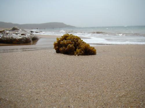 mubarak village arabian sea beach bilal mirza بلال مرزا bilalmirza بلالمرزا 比拉尔米尔扎बिलालमिर्जा билалмирза билал बिलाल ميرزا 米比勒