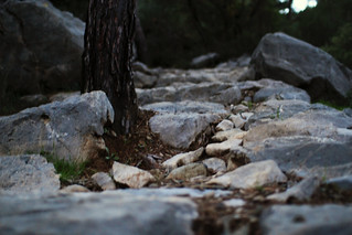 Path to the Chimaera - IMG_1764.jpg   by Poo-tee-weet?