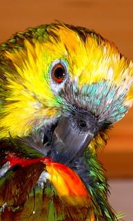 Happy Wet &Wild! Feathery Friday!