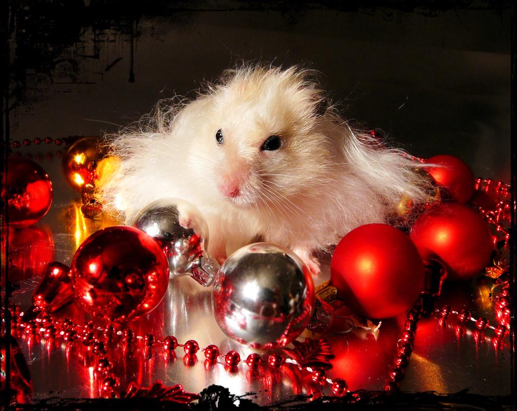 I Hate Christmas.I Hate Christmas Piorko He Hated Christmas Even As