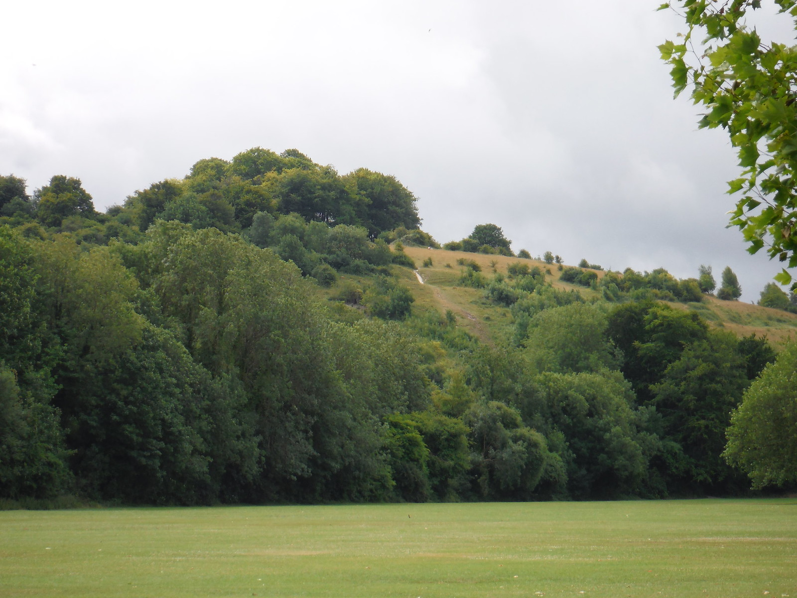 St, Catherine's Hill from riverside meadow SWC Walk 15 : Winchester Circular