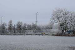 winter-2017-14