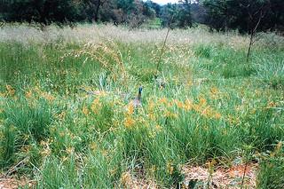 South Africa 415 041293 Krugersdorp Game Reserve