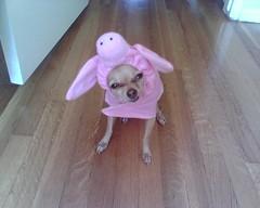Little piggy... | by *Glow*