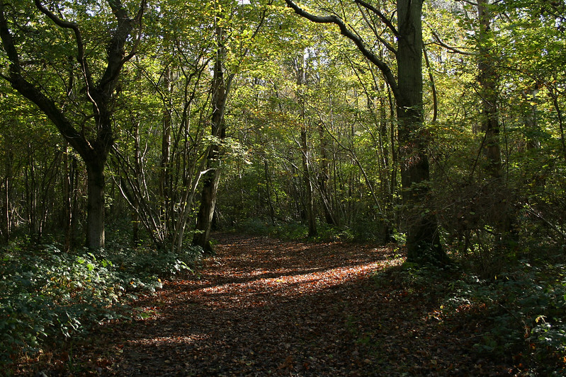 Foxley Wood, Norfolk, UK