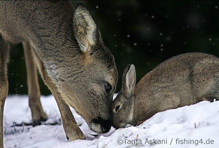 My Winter Friend    | A wild rabbit and deer become best fri
